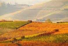 De wijngaarden van de herfst stock afbeelding