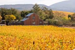 De Wijngaarden van de Napavallei in Autumn Colors en Schuur Royalty-vrije Stock Foto's
