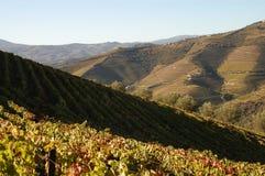 De wijngaarden van Douro stock fotografie