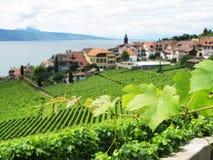 De wijngaarden van Famouse in Lavaux Stock Foto's