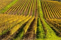 De wijngaarden van het de wijngebied van de chianti, Toscanië royalty-vrije stock foto's