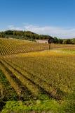 De wijngaarden van het de wijngebied van de chianti, Toscanië royalty-vrije stock afbeeldingen