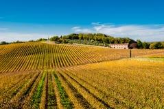De wijngaarden van het de wijngebied van de chianti, Toscanië Royalty-vrije Stock Foto