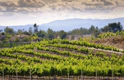 De Wijngaarden van het Land van de Temeculawijn, Californië Stock Foto