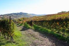 De wijngaarden van Langhe in de Herfst Stock Afbeelding