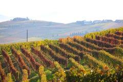 De wijngaarden van Langhe in de Herfst Stock Afbeeldingen