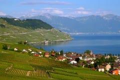 De wijngaarden van Lavaux op Meer Genève, Zwitserland Stock Foto's