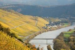 De Wijngaarden van Moezel van de rivier Royalty-vrije Stock Afbeeldingen