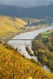 De Wijngaarden van Moezel van de rivier Stock Foto's