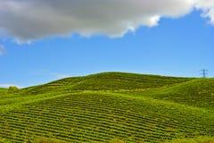 De Wijngaarden van Nappa Stock Afbeelding