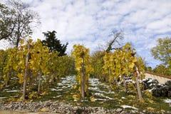 De wijngaarden van Praag Stock Foto