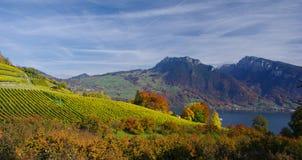 De Wijngaarden van Spiez, Zwitserland Stock Foto's