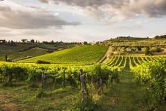 De wijngaarden van Toscanië Stock Foto