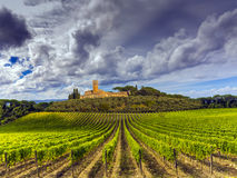 De wijngaardenplatteland van Toscanië Stock Afbeeldingen