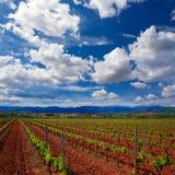 De wijngaardgebieden van La Rioja op de Manier van Heilige James stock afbeelding