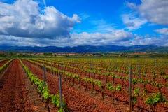 De wijngaardgebieden van La Rioja op de Manier van Heilige James stock foto
