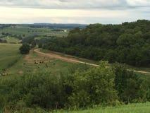De wijnland van Wisconsin Royalty-vrije Stock Afbeeldingen