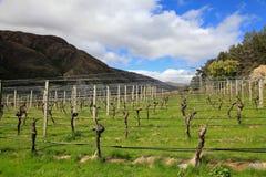 De Wijnmakerij van de Gibbstonvallei royalty-vrije stock afbeeldingen