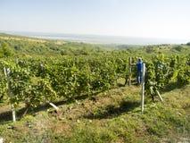 De wijnmakerij van prinsStirbey, Roemenië royalty-vrije stock foto's