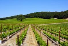 De Wijnmakerij van Robles van Paso Royalty-vrije Stock Fotografie