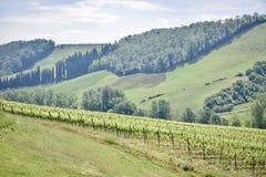 De wijnmakerij van San Gimignano Royalty-vrije Stock Foto's
