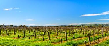 De wijnmakerijen van het McLarendal Royalty-vrije Stock Foto