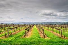 De wijnmakerijen van het McLarendal Royalty-vrije Stock Fotografie
