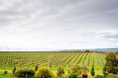 De wijnmakerijen van het McLarendal Royalty-vrije Stock Afbeelding