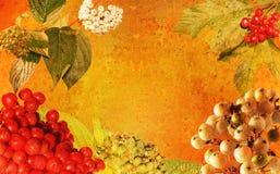 De wijnoogst stileerde herfstframe Stock Afbeelding