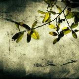 De Wijnoogst van bladeren vector illustratie