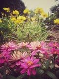 De wijnoogst van bloemen Stock Afbeelding