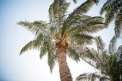 De Wijnoogst van Vintgepalmen - duidelijke de zomerhemel Licht onduidelijk beeld in agent om motie te tonen Royalty-vrije Stock Fotografie