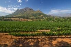De Wijnroutes van Stellenboschamerican express, Zuid-Afrika Stock Afbeelding