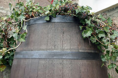 De wijnstok groeit van het vat Stock Afbeelding