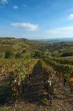 De wijnstok van Beaujolais Royalty-vrije Stock Foto's
