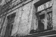 De wijnstok van de vensterbakstenen muur Stock Fotografie