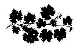 De wijnstok verlaat zwart silhouet geïsoleerde witte achtergrond Stock Afbeeldingen