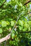 De wijnstokaanplanting van de landbouwersverwerking door pesticide Stock Afbeelding