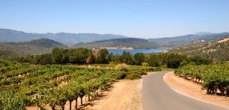 De Wijnstokken en de Bergen van de Vallei van Napa Royalty-vrije Stock Foto's