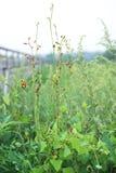 De wijnstokken op het gras, de groene achtergrond die, de groene bladeren, de installaties, het de zomerlandschap zich omhoog uit stock foto's