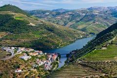 De Wijnstokken van de Dourorivier stock foto's