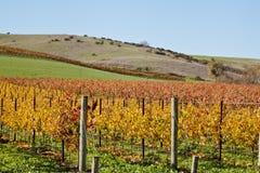 De wijnstokken van de Vallei van Napa Stock Fotografie