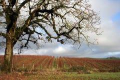 De Wijnstokken van de winter Royalty-vrije Stock Afbeelding
