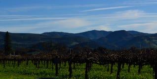 De Wijnstokyard van de Napavallei in de winter stock afbeelding