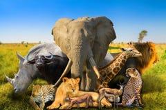 De wilde Afrikaanse Achtergrond van Dieren royalty-vrije stock foto's