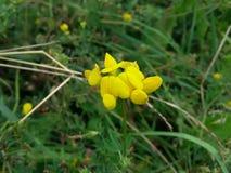 De wilde bloem Stock Foto's