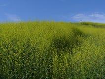 De wilde bloemen Aliso Viejo CA de V.S. van de vliegerheuvel Stock Fotografie
