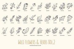 De wilde bloemen en de kruiden overhandigen getrokken reeks Volume 2 plantkunde Uitstekende bloemen Uitstekende vectorillustratie vector illustratie