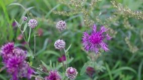 De wilde bloemen onder groen gras bij de zomerdag, sluiten omhoog stock footage
