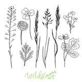 De wilde bloemen overhandigen getrokken reeks Inktkruiden Kruidengeneeskunde vectorillustratie Stock Foto